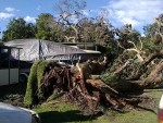 Tree down: the largest tree to fall in the Yanakie Caravan Park narrowly missed causing any property damage.