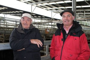 Seeing is believing: Bernie McRae from Lance Creek and Rohan McRae from Elders were at the store sale in Koonwarra last Thursday. Bernie was at the sale to have a look.