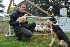 Chicken little: Ilan Goldman with one of the chickens grown for meat on his Mirboo North farm, while Rufus the dog watches closely.