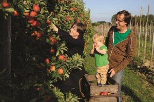 Opportunities: turning you plot into productive land will be a key focus of the Phillip Island Small Farm and Lifestyle Expo.