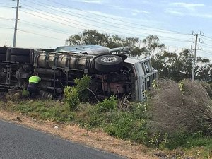 Massive loss: more than 20 cows were put down and a Koo Wee Rup driver suffered minor back injuries following a truck crash at Leongatha South on Wednesday morning.