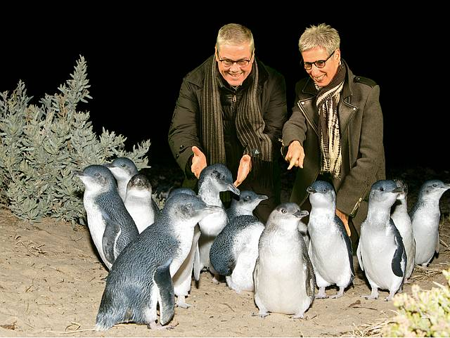 Official visit: Anthony Howard and Governor Linda Dessau meet penguins at Phillip Island.